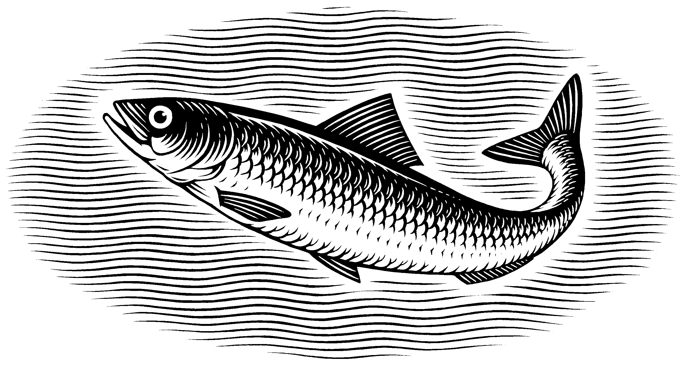 Sardine with Curved Tail Up